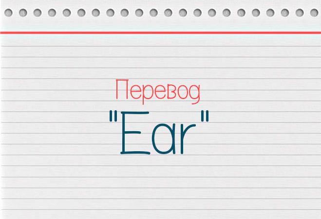 Как переводится слово уши на английский?